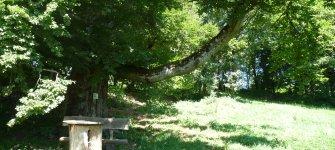 Das Welterbe verbindet - die Limes-Gemeinden im Naturpark Altmühltal!