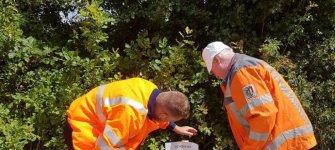 Eichenprozessionsspinner - Gefahr für Wald und Mensch